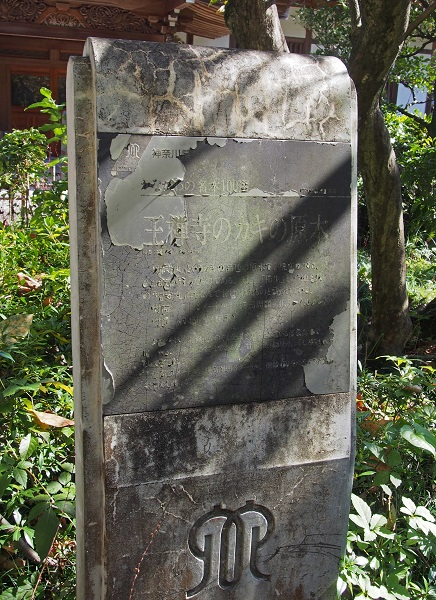 Pa242666